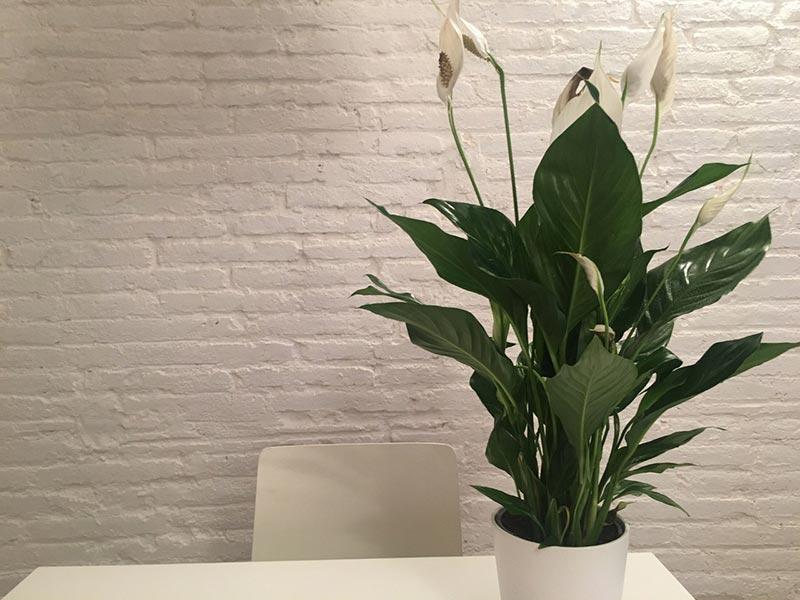 Boas energias - plantas e flores